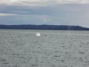Photo: Then we found some humpbacks
