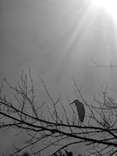 Photo: Black and white photo of a heron on a tree under sunlight at Carriage Hill Metropark in Dayton, Ohio.