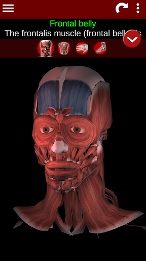 Muscular System 3D (anatomy) 2.0.8 screenshots 1