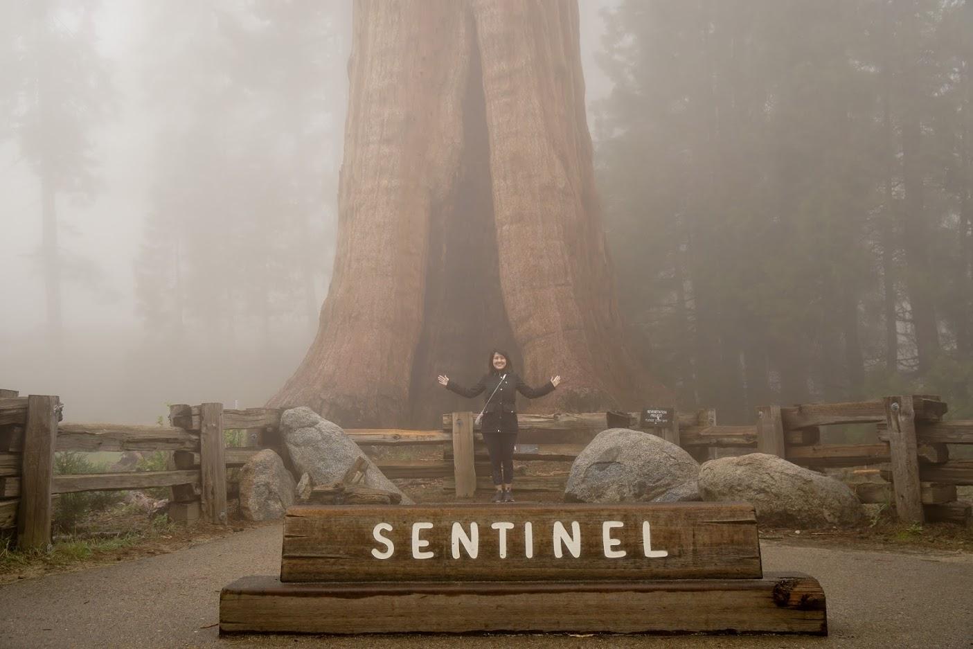 Sentinel Sequoia National Park