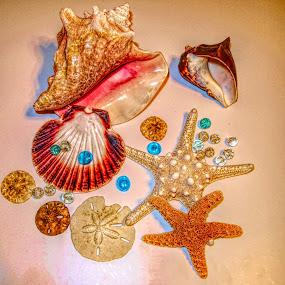 Sea Treasures by Jackie Sleter - Digital Art Things ( sand, orange, lighting, blue, florida, starfish, sand dollar, sea, conch shell, brown, beach, color glass )