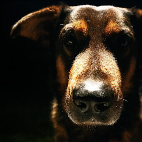 Bruno by Paschalis Angelopoulos - Animals - Dogs Portraits (  )
