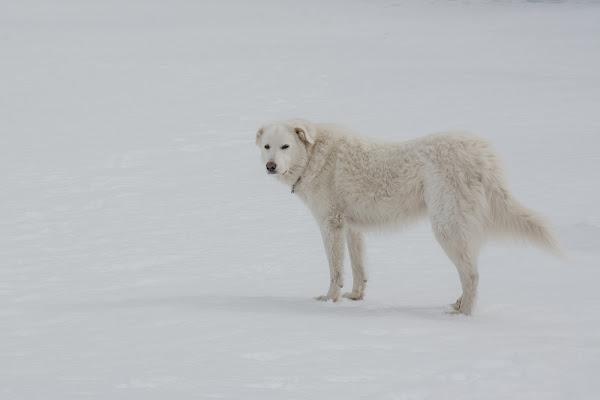 In mezzo alla neve di LucaMonego