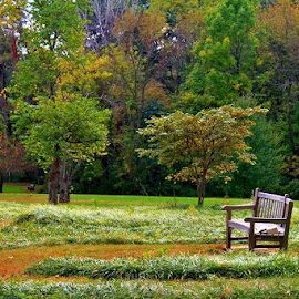 Fall Bench by Sandy Darnstaedt - City,  Street & Park  City Parks (  )