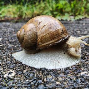 Snail by Boban Buliga - Animals Other ( #nature #naturelovers #naturelover #nature_seekers #natureonly #nature_shooters #nature_prefection #naturediversity #naturephotography #naturewalk #naturegram #naturelove )