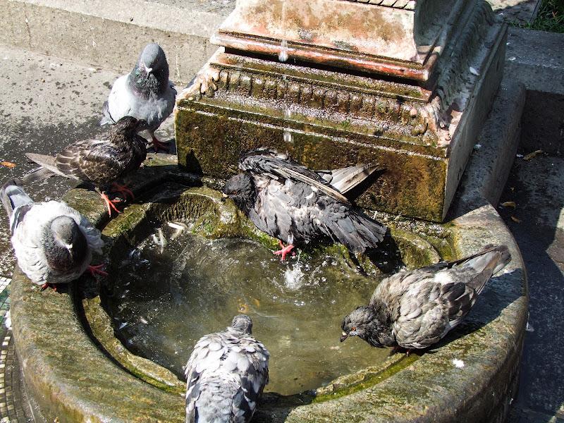 Dai ... facciamoci un bagno! di Giò Volpi