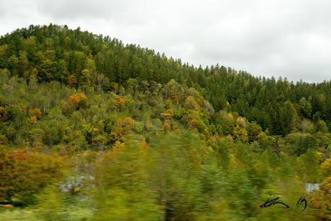 紅葉の錦模様を描く車窓風景