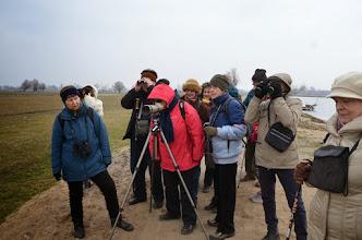 Photo: Obserwowaliśmy też gęsi, czaple, kormorany, łabędzie, kaczki i ... krowy rasy mięsnej.