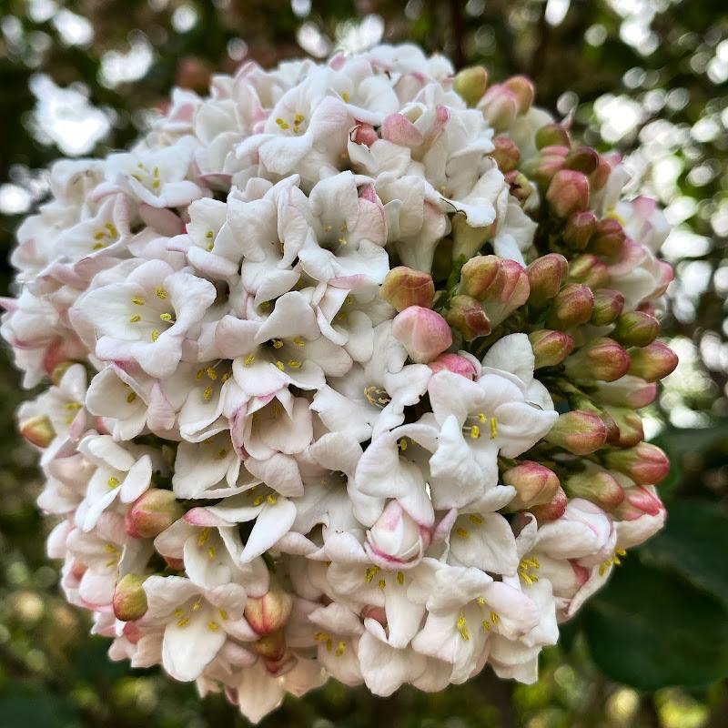 in bloom di ErikaFlorean