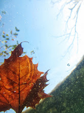 Photo: Looking up at an orange leave floating on a lake at Eastwood Park of Five Rivers Metroparks in Dayton, Ohio.
