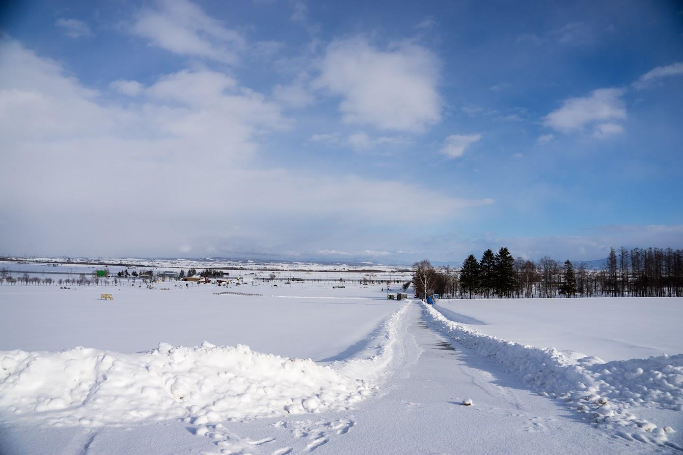 真っ白な雪道