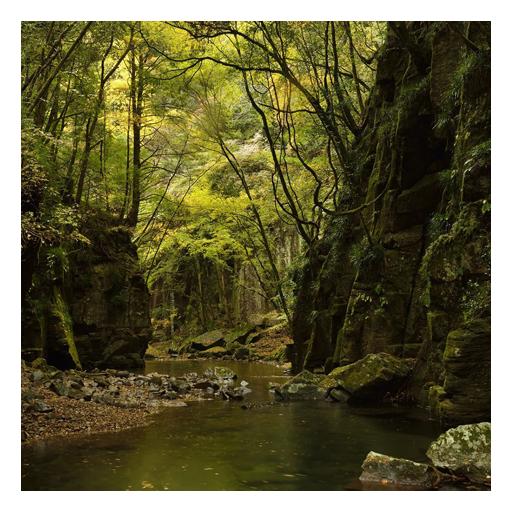 森林生活壁纸 生活 App LOGO-硬是要APP