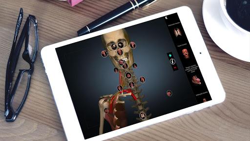 Anatomy Learning - 3D Atlas 2.1 screenshots 6