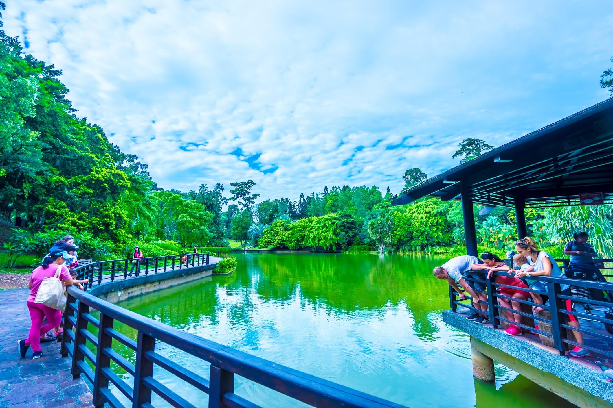 シンガポール植物園(ボタニック・ガーデン) シンフォニー・レイク3