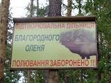 Заповедные леса