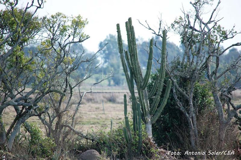 Photo: Rio Grande, RS. Foto: Antonio Soler/CEA