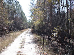 Photo: An example of one of the many miles of interior roads in The Great Satilla Preserve