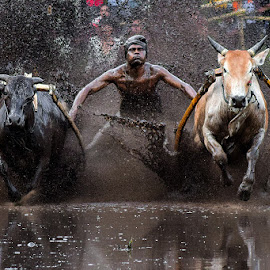 close your eyes by Deki Hendrik - Sports & Fitness Other Sports ( mud, cow, sport, pacu jawi )