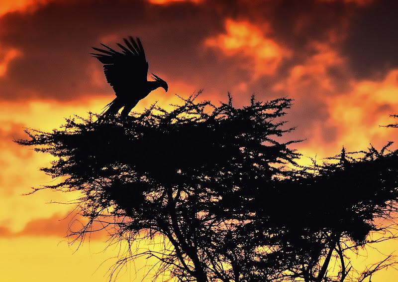 Controluce al tramonto di vito_masotino