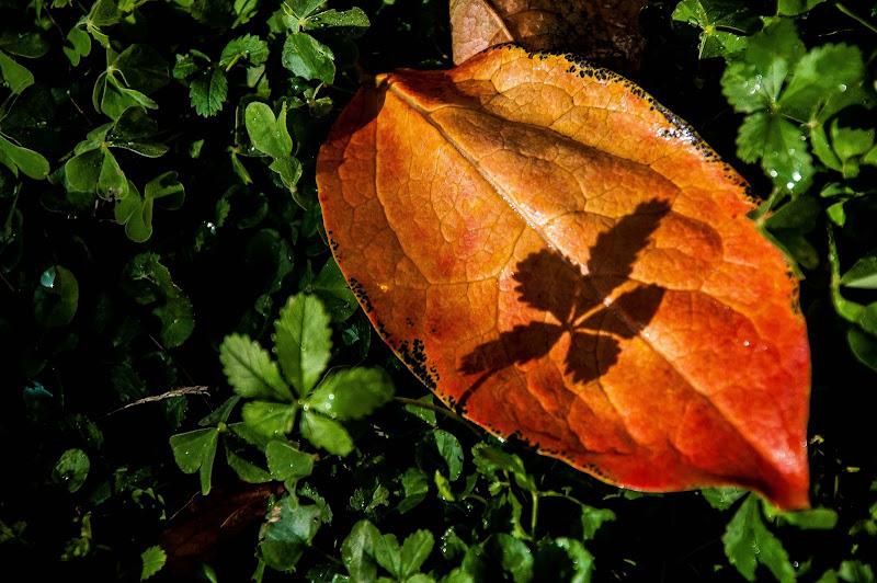 l'ombra sulla foglia di domenicolobinaphoto