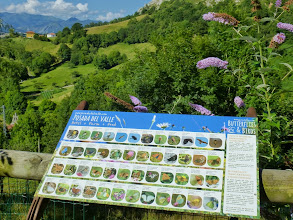 Photo: April /May; with the wild flowers there are butterflies galore and an information board to help you identify them.