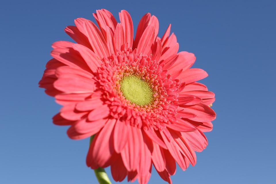 Top 5 plantas con flores de colores vivos
