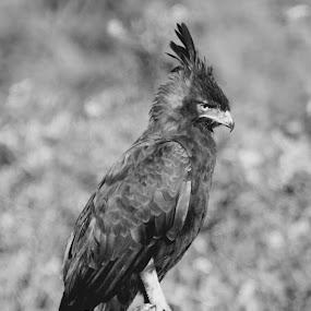 Relaxing a bit  by Johann Bekker - Novices Only Wildlife ( park, birds )