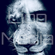 Download Lion Media App For PC Windows and Mac