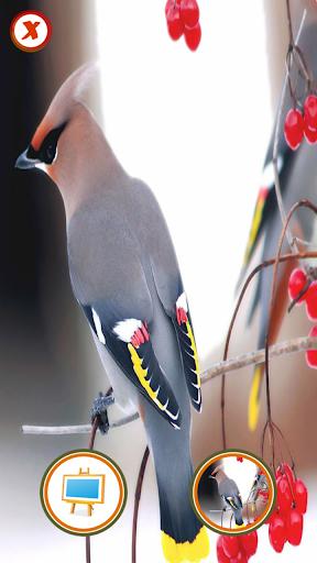 鳥の写真スタジオ