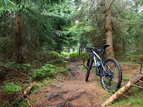 Photo: Z przeł. Żmijowa Polana jadę zielonym szlakiem rowerowym tuż pod samą Czarną Górę, końcówka to taka techniczna ścieżka.