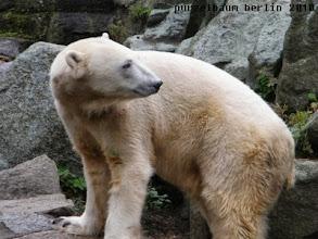 Photo: Knut auf seinem Stammplatz ;-)