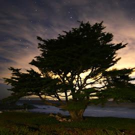 Monterey Coast Tree by Sean Markus - Novices Only Landscapes ( nikon, monterey, longexposure, tamron1530, nikond750, california, tamron )