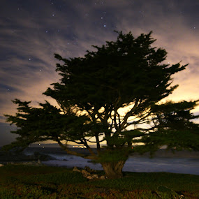 Monterey Coast Tree by Sean Markus - Novices Only Landscapes ( nikon, monterey, longexposure, tamron1530, nikond750, california, tamron,  )