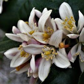by Denise O'Hern - Flowers Tree Blossoms