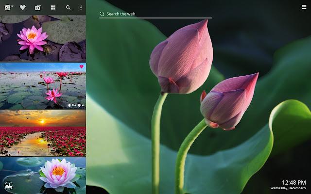 Lotus Flower Hd Wallpapers New Tab Theme