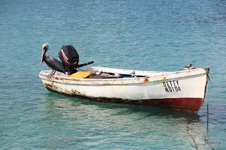 Photo: Pelícano viendo que trajo el pescador
