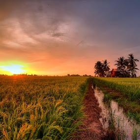 Harvesting Sunset by SyaFiq Sha'Rani - Landscapes Prairies, Meadows & Fields