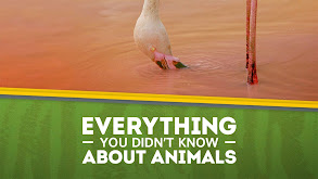 Everything You Didn't Know About Animals thumbnail