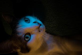 Photo: Blue light
