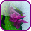 Frost flowers Live Wallpaper icon