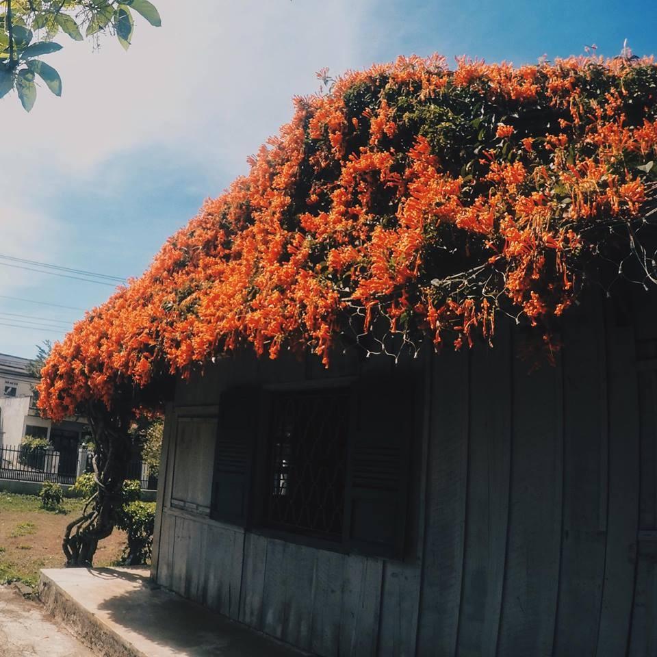 Trồng cây dây leo che phủ cho mái nhà ngày hè oi ả