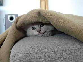 Photo: Quinlan - jugando al escondite ;P (40 días)