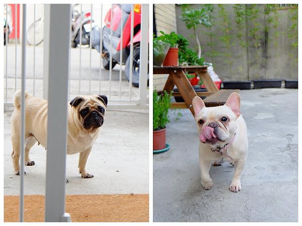 走療癒路線的︳嗝gé ︳毛小孩咖啡廳,可以帶寵物們一起來和店狗們玩耍唷~