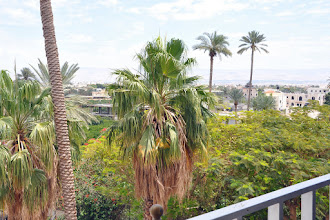Photo: Jericho is the city of palmtrees