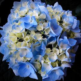 by Millieanne T - Flowers Flower Gardens