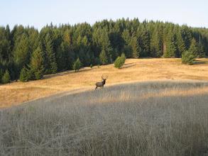 Photo: Elch auf dem Wanderweg
