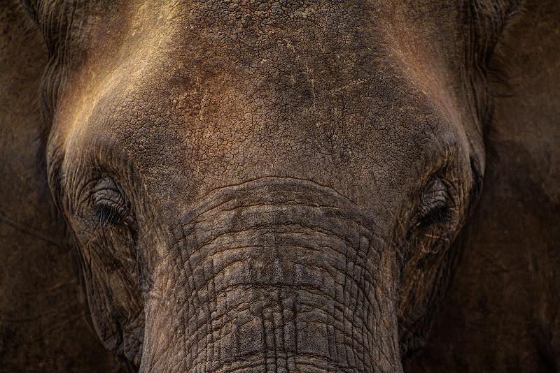 The big head di Sergio Pandolfini