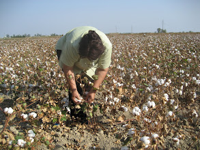 Photo: Mastura demonstrates cotton picking