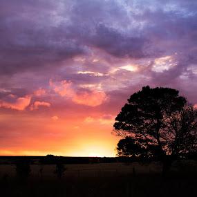 Morgi sunset by Gill Fry - Landscapes Sunsets & Sunrises ( clouds, orange, sky, tree, purple, sunset,  )