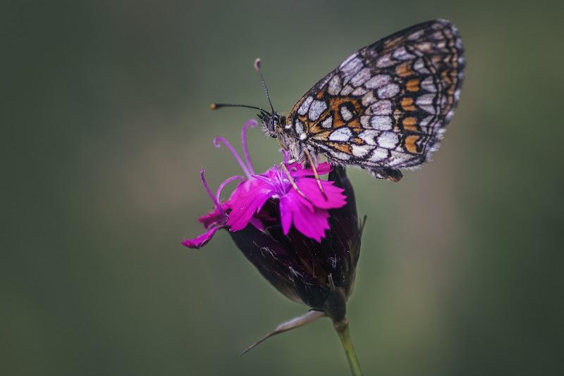 Madame Butterfly di Sara_V_98